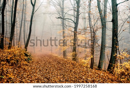 A trail in the autumn misty forest. Autimn misty forest trail. Misty forest trail in autumn. Autumn misty forest scene Foto d'archivio ©