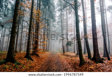 A trail in the autumn misty forest. Misty forest trail in autumn scene. Autumn misty forest trail. Autumn forest trail in mist Foto d'archivio ©