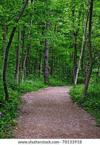 a trail through a Ontario forest in spring