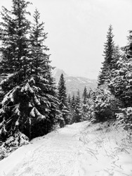 A trail to Hala Gąsienicowa Valley, Tatra Mountains, Poland. The beginning of winter in the mountain area.