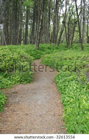 A trail winding through the Washington forest near the coast.