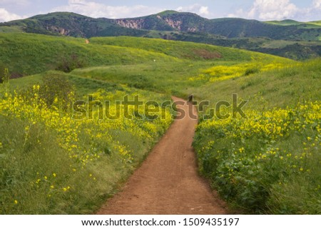 A trail winds through Chino Hills State Park, California Foto stock ©