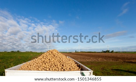 A trailer of freshly harvested yellow potatoes sits by the farm field near Montreal during harvest season.