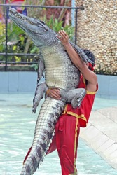 A trainer wrestles with a crocodile during a show in a zoo in Thailand