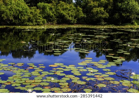 A tranquil pond with lily pads and the sky reflecting of the surface.
