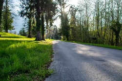 A tranquil scene with an empty road in a spring forest during a sunny morning. Natural Parkland with no people.