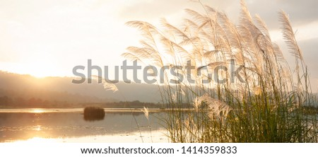 A tranquil sunset lake with reed flowers swinging in the wind, glowing sun setting over a mountain range in backgrounds.