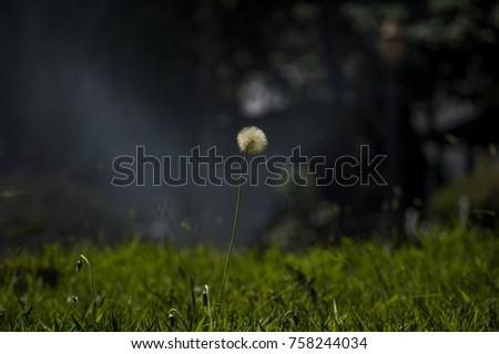 Shutterstock a tranquilidade de um gramado de jardim.