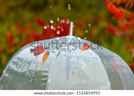 A transparent umbrella in the rain in bright autumn leaves on a natural background of an autumn park. The atmosphere of autumn weather.  #1533854993