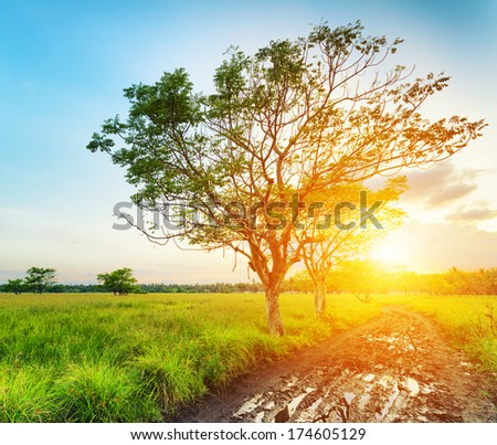 A tree at sunset time. Summer landscape.