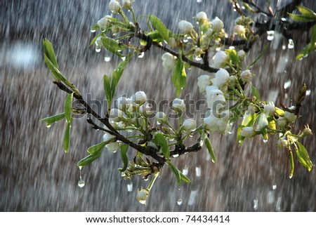 a tree branch with flowers in the rain