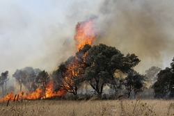 A tree devoured by flames. Fires in Italy, Sicily, Sardinia. Greece. Turkey. Climate change. Enviromental
