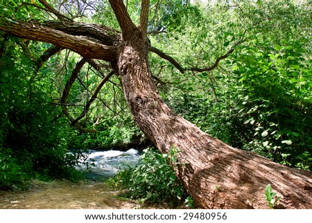 A tree drooped toward a little creek in a dense forest