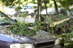 A tree fell on the car due to strong wind. Broken vehicle after the storm. Disaster in a city. Broken car .