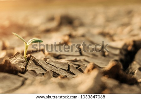 A tree growing on cracked ground. Crack dried soil in drought, Affected of global warming made climate change. Water shortage and drought concept.