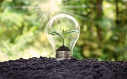 A tree grows in light bulbs, energy-saving and environmental concepts on Earth Day.