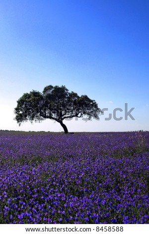 A Tree in a blue field