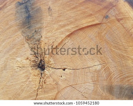 A tree in a cut.Cutting edge of timber, Logs Timber in the forest.Old wood texture pattern of vintage lines. Brown firewood texture. Abstract background. Empty backdrop. empty space, Cracks of wood #1059452180