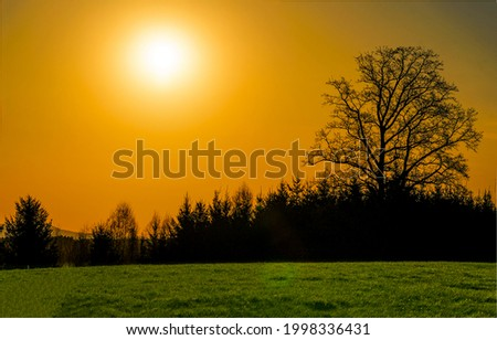 A tree in a field at sunset. Sunset forest trees. Orange sunset in over forest treew. Sunset landscape