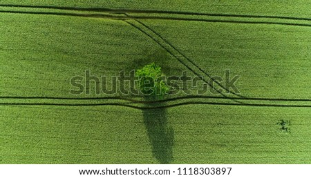 a tree in a field in aerial view #1118303897