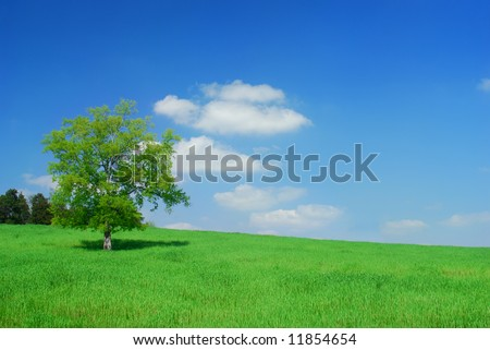 A tree in a field of grass with blue sky. #11854654