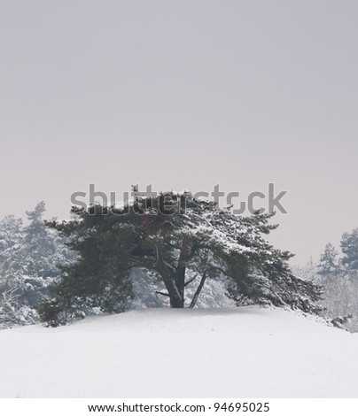 A tree in a very cold dutch landscape