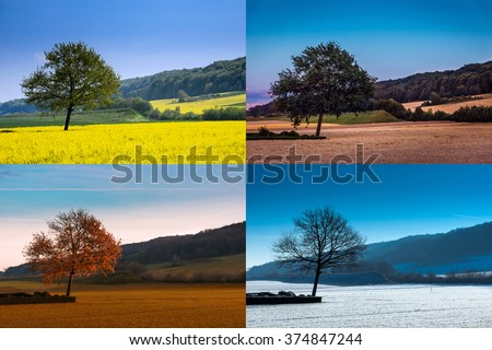 A tree in four seasons #374847244