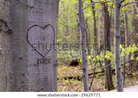 A tree in the forest with a heart and the word forever craved on it