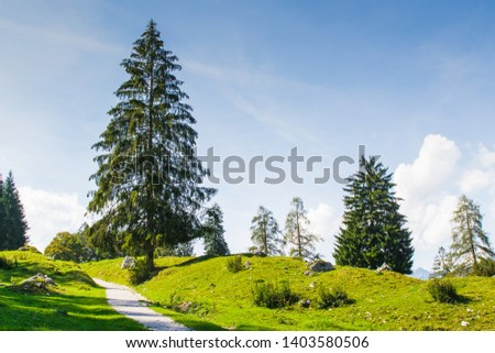 A tree in the middle of green meadow with blue sky background #1403580506