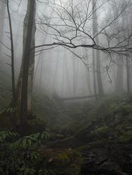A tree in the Smokey Mountains