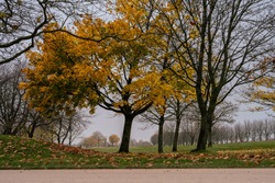 A tree in yellow autumn colors with a misty background. Picture from Scania county, Sweden
