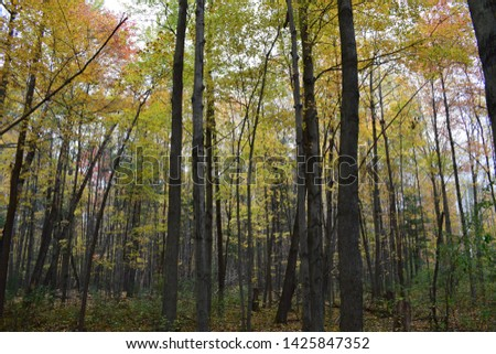 A tree is a plant form that can be found in many different orders and families of plants. Trees show many growth forms, leaf type and shape, bark traits and organs.