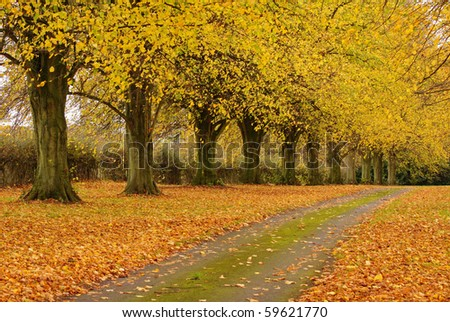 A Tree lined avenue with a carpet of Autumn leaves