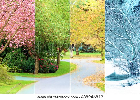 A tree lined street, photographed in all four seasons from the same location. Spring, Summer, Fall, Winter.  stock photo
