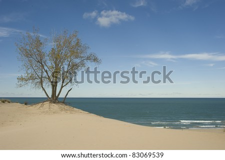 A tree on a dune at Mt. Baldy in Michigan City IN.