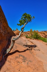 A tree on the background of an Eroded landscape, Arches National Park, Moab, Utah, USA