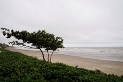 A tree on the beach blowing in the strong wind coming in off the ocean on an overcast rainy day