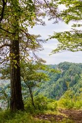 A tree on the edge of a cliff in mountain region of Adygea republic, Russia.