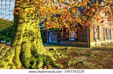 A tree on the street of the autumn city. Autumn in city. Autumn tree trunk. Autumn city scene