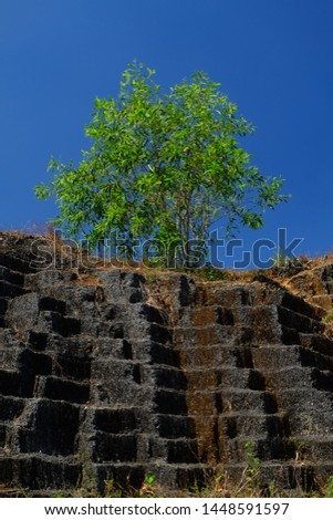 a tree on top of the limestone rock, tourist destination in Asia and Indonesia