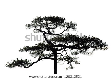 A tree on white background