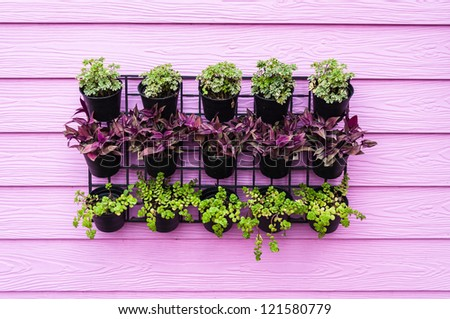 A tree planted beside the pink walls. - stock photo