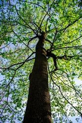 A tree resembling the human circulatory system