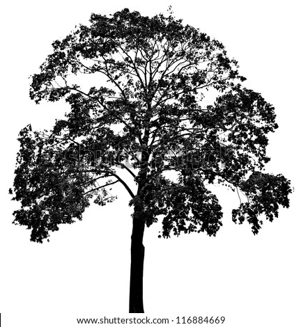 a tree silhouette