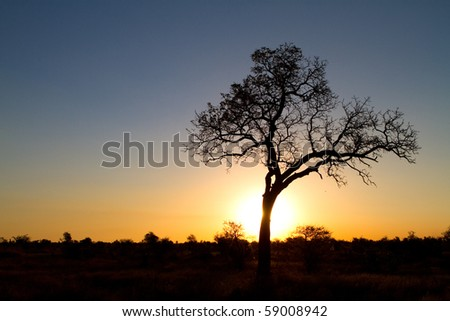 A tree silhouette during sunset