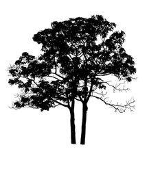 a tree silhouette on white background.