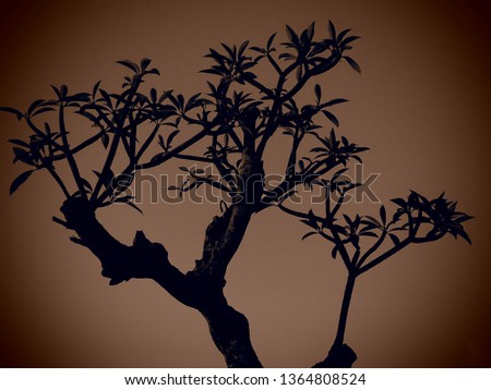 A tree silhoutte dark background. #1364808524