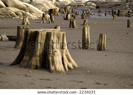 A tree stump exposed with low water levels.