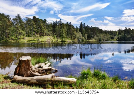 A tree stump on the shore of Tarn Hows, a small lake in the English Lake District