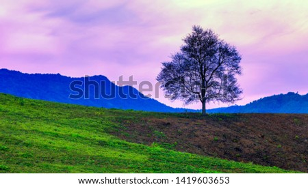 A tree that has no leaves, leaving only one tree on the mountain that is made into agriculture. Is lonely and lonely for beautiful nature.